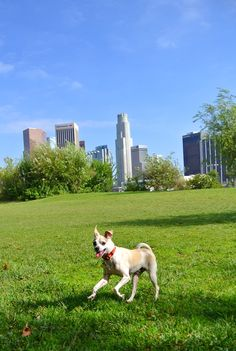Happy Hazel - A Lifestyle Blog from Los Angeles: Happy The LA DOG!