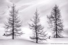 We are not Christmas Trees! by Duschan Tomic