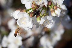 THE PERFECT CRIME: WHAT'S KILLING ALL THE BEES?
