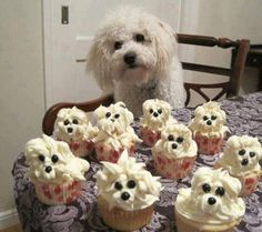 Poodle cupcakes - yum! They all have different hairstyles - some Tina Turner, some Jennifer Aniston. Love it.