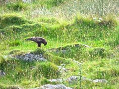 I'd had a stressful week and the pull of the West Coast was especially strong so I booked a last minute hotel and headed to Oban with my bike. Oban is one Buzzard, Bald Eagle, Finding Yourself, About Me Blog, Soul Searching, Common Buzzard, Hawks
