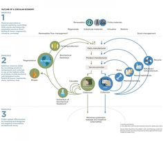 Economía Circular: mariposas y la cuarta revolución industrial