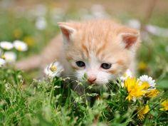 Erster großer Ausflug? Babykatze auf der Wiese — Bild: Shutterstock / Anettphoto  www.einfachtierisch.de