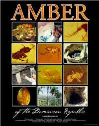 The amber of of the Dominican Republic has been found to have special properties for the preservation of fossils. .