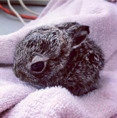 I really want this baby bunny