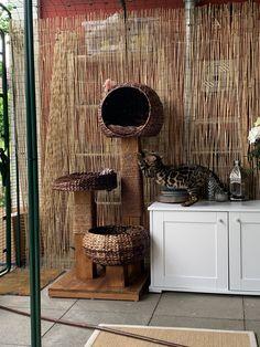 Outdoor Cat Enclosure, Outdoor Cats