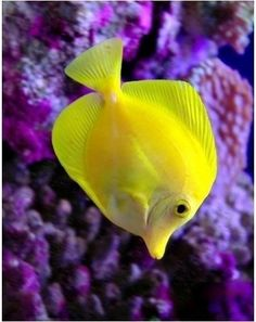 everyday a different color, beautiful gifs, soft goth, nature. images that I like and attract my attention. I hope you'll find images here for your taste too. Red And Teal, Shades Of Yellow, Purple Yellow, Blue Brown, Green Colors, Vibrant Colors, Aesthetic Colors, Color Box, Tropical Fish