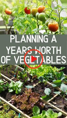 veggie garden Planning out a years worth of vegetables to feed your family. Gardening and growing food to feed your family. How to create a home vegetable garden. Veg Garden, Edible Garden, Garden Beds, Vegetable Gardening, Garden Tomatoes, Vegetables Garden, Backyard Vegetable Gardens, Potager Garden, Small Yard Vegetable Garden Ideas