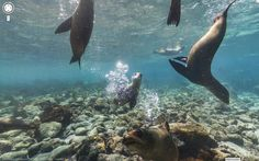 Galapagos Islands, Ecuador   Community Post: 10 Stunning And Remote Places To Visit On Google Street View