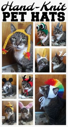 Funny knit hats for cats (or small dogs)