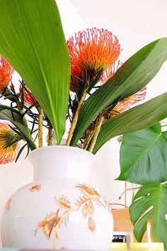 Geschenke zur Geburt - Blumenabo von Bloomy Days, Nadelkissenblume (Leucospermum), rote Blume