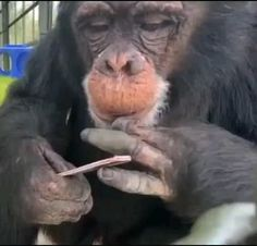 Funny Animal Jokes, Cute Funny Animals, Animal Memes, Funny Monkeys, Funny Humor, Baby Exotic Animals, Cute Little Animals, Animals And Pets, Cute Animal Videos
