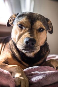 Hunde Foto: Andreas und He-Man - Mein He-man Hier Dein Bild hochladen: http://ichliebehunde.com/hund-des-tages #hund #hunde #hundebild #hundebilder #dog #dogs #dogfun #dogpic #dogpictures