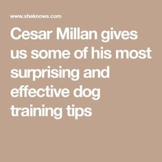One tip to keep in mind when training your dog is to never ever reward bad behavior in an effort to quickly end a behavior. This will only teach the dog that it can do what it wants and has power over you. An example of this would be to give the dog treats every time it barks. *** You can get more details by clicking on the image. #ciudaddemexico