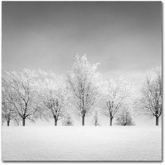 Trademark Fine Art Ice Storm Canvas Art by Dave MacVicar, Size: 35 x 35, Multicolor