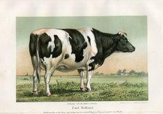 Antique Print-HOLLAND-COW-NETHERLANDS-Hengeveld-1865