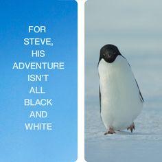 Disneynature's Penguins – In Theatres April 17 - Antarctica Cute Funny Animals, Funny Animal Pictures, Cute Baby Animals, Animals And Pets, Cute Pictures, Penguin Love, Cute Penguins, Beautiful Birds, Animals Beautiful