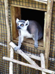 Safari Wilderness Ranch: Fun animal encounters off the beaten path in Central Florida