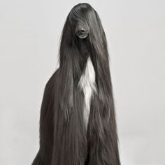 Animals-With-Majestic-Hair15