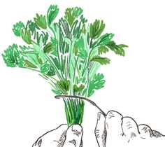 Never waste time picking cilantro leaves again.