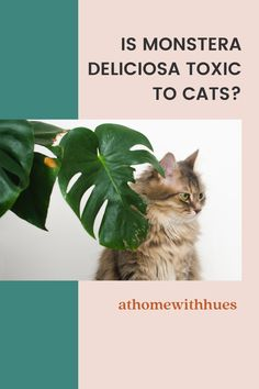 Make sure you're clued up on how to keep your cat safe from your Monstera – and vice versa. After that, you can find the perfect spot in your home for your newest member of the green family. Houseplants Safe For Cats, Easy Care Indoor Plants, Cat Reading, Leafy Plants, Cheese Plant, Monstera Deliciosa, Pet Safe, Plant Care, How To Take Photos