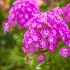 barrenwort Best Perennials, Hardy Perennials, Flowers Perennials, Impatiens Flowers, Shade Flowers, Shade Plants, Yellow Flowers, Perennial Geranium, Seaside Garden