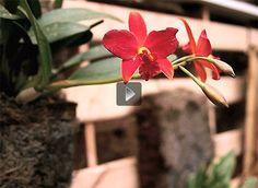 Vasos e suportes reciclados para plantas - video