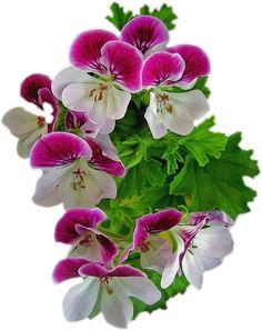 Pink Violet Flower PNG Clipart.