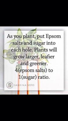 Garden Yard Ideas, Lawn And Garden, Garden Projects, Garden Landscaping, Garden Pallet, Rooftop Garden, Patio Ideas, Garden Beds, Home And Garden