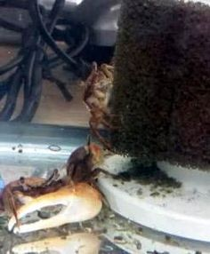 Why are Sponge Filters Beneficial? http://www.fishbeginner.info/home/what-is-an-aquarium-sponge-filter/