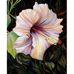 """Hibiscus, Oil on Canvas, 30"""" X 38"""", 2006 by Kate Hoyer"""