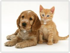 GET RID OF FLEAS AND TICKS-TREATMENT AND CONTROL