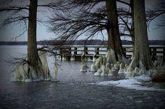 Reelfoot Lake winter - Tennessee