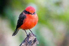 Descubren una nueva especie de ave en las Islas Galápagos que ya está extinta