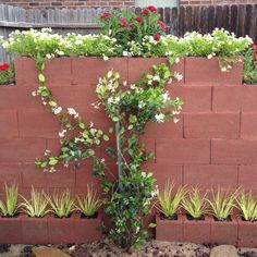 disguise cinder block outdoor fence - Google Search
