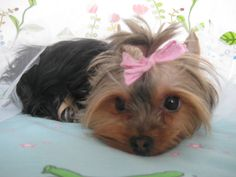 Lily - 2.2.2014 Lily, Dogs, Animals, Animales, Animaux, Pet Dogs, Orchids, Doggies, Animal
