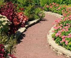 Walk Thru the Seasons to pick out a plant that might be missing in your home landscape