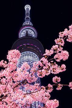 Skytree — телевизионная башня в районе Сумида, Токио, Япония, самая высокая среди телебашен мира.
