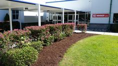#flowerbed #mulch #yard #school