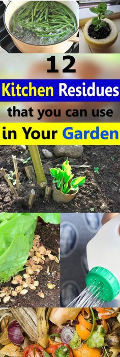 Do you know that a lot of waste stuff and kitchen residues that you usually throw away can be used in the garden? Find out more! Backyard Vegetable Gardens, Veg Garden, Edible Garden, Garden Plants, Glass Garden, Indoor Garden, Organic Gardening, Gardening Tips, Balcony Gardening