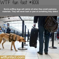 Bomb-sniffing dogs - WTF fun fact