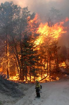 See full size image Wildland Firefighter, Volunteer Firefighter, Fire Dept, Fire Department, Natural Phenomena, Natural Disasters, Gatlinburg Fire, Fire Tornado, Wow Photo