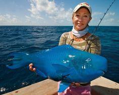 El pez loro azul El pez de estas imágenes pertenece a la especie Scarus coeruleus y se puede encontrar en el Atlántico Occidental.  Lo más...