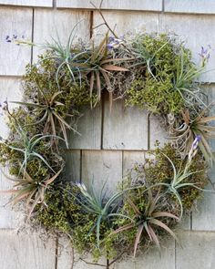 Create a living wreath with tillandsia, moss and elements from your landscape.