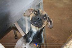 ONG Anjos de Quatro Patas, voluntariado e amor pelos animais.