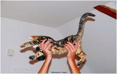 #Katze #Katzenliebhaber #Katzenbilder #Lunalinacat #catsagram #bestcat #catphoto #catsoftheworld #catoftheday #artcat #happycat #catlove #instacat #lulucat #catlovers #catsdaily #catsareawesome #instameow #catstagram #dailycat #bestcats #instacats  #catworld #crazycat  #catlover Big And Small, Small Cat, Cat Pin, Cat Photography, Cartoon Design, Modern Man, Crazy Cats, Cool Cats