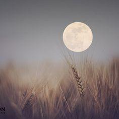 Super moon Click and like my Facebook page: https://www.facebook.com/SeedingAbundanceNow