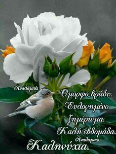 Happy Birthday Wishes Quotes, Wish Quotes, Good Night Quotes, Happy Birthday Captions