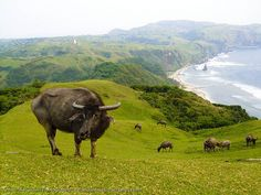 Batanes, Philippines I'll conquer the Philippines! Yup and BATANES will be the first one! Filipino, Beautiful Islands, Beautiful Places, Places To Travel, Places To Visit, Batanes, Philippines Travel, Visit Philippines, Tourist Spots