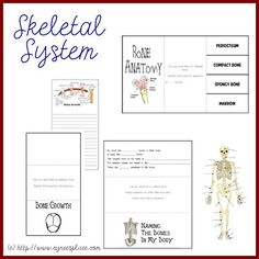 Free Anatomy lap book; links to other skeletal system activities, and more.